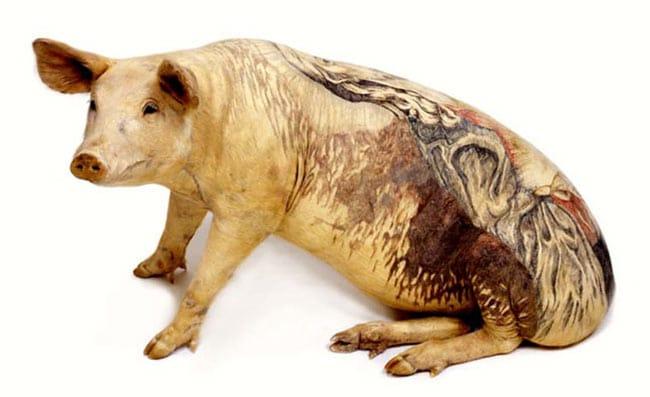 un-artiste-realise-des-tatouages-sur-des-cochons-pour-en-faire-des-oeuvres-d-art-4
